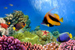 Marine life on the coral reef - 31880549