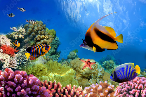 canvas print picture Marine life on the coral reef