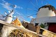 Mykonos island' windmills and cat