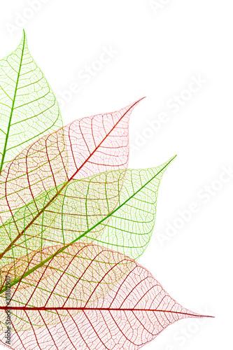 Nervures feuilles vertes et rouges