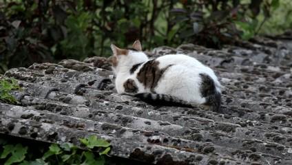 Die Katze auf dem Dach dreht aufmerksam den Kopf