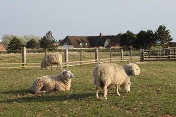 Bauernhof_02