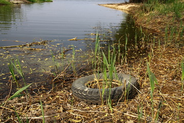 Tyre on the shore