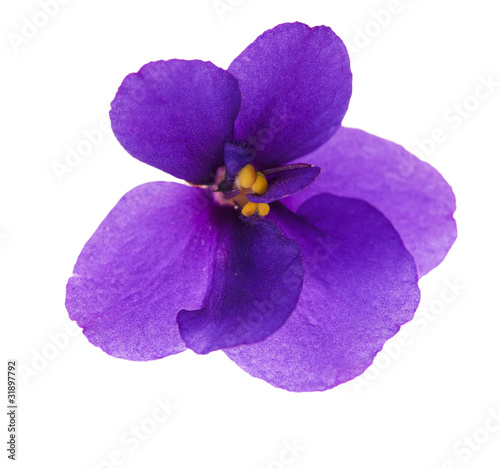 Foto op Canvas Lilac single simple isolated violet
