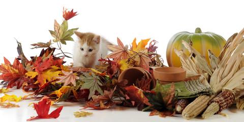 Harvest Time Kitty