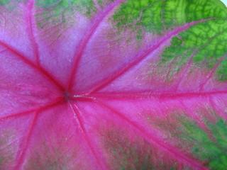 artisitc leaf texture 2