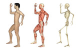 Anatomical Overlays - Male with Arm and Leg Bent poster