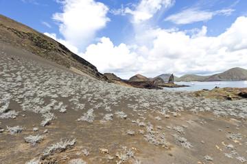 Isla Bartolomé #2