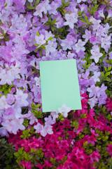 letter[azalea]_57