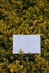 letter[leavesC]_13
