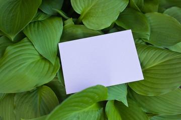 letter[leavesI]_04