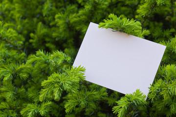 letter[leavesN]_03