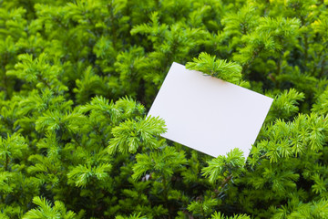 letter[leavesN]_02