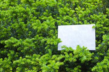 letter[leavesN]_26