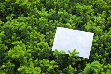 letter[leavesN]_19