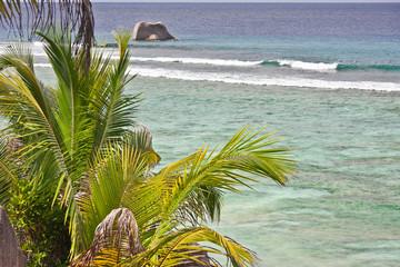 mer et cocotier aux Seychelles