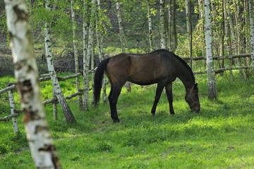 animal, brown, farmland, landscape, nature, horse