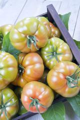 Pomodoro insalataro