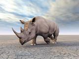 Fototapeta nosorożec - zwierzę - Dziki Ssak