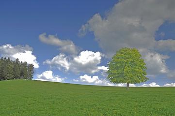 Wiese mit Baum
