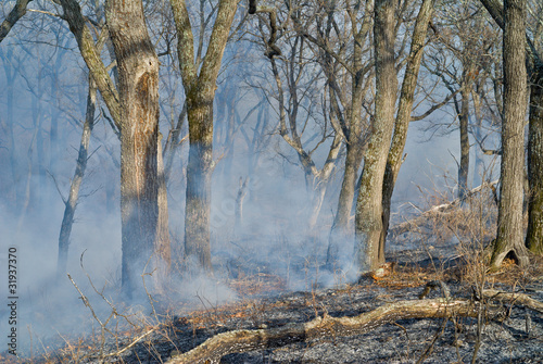 Fire in Forest 13