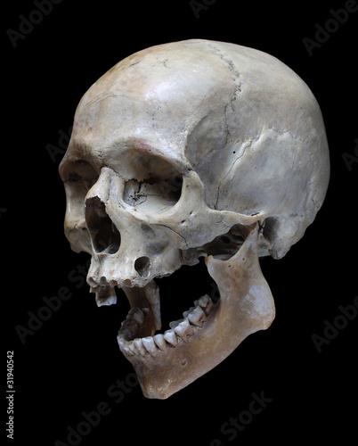 Torso Bone Anatomy 1000+ images about Sku...