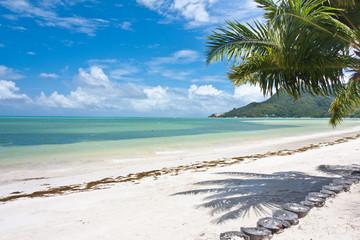 plage sous les cocotiers à Praslin aux Seychelles