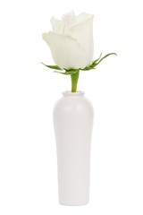 white rose in a vase