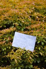 letter[leavesA]_09