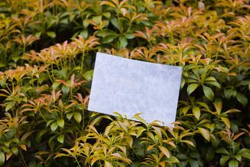 letter[leavesA]_08