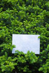 letter[leavesN]_24