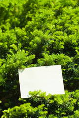 letter[leavesN]_14