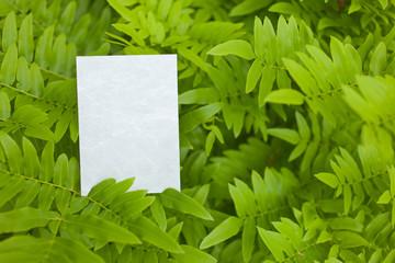 letter[leavesG]_04