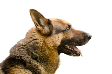 Profilo Cane