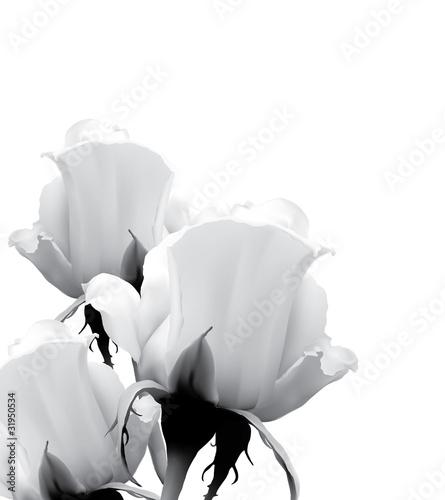 trzy-biale-roze