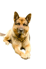 cane a cinque stelle