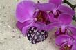 Orchideenblüte und Herz