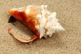 Muschelschale auf Sand