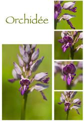 composition orchidées sauvages