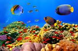 Zdjęcie koralowej kolonii na rafie, w Egipcie
