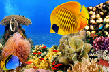Fototapety Photo of a coral colony, Red Sea, Egypt