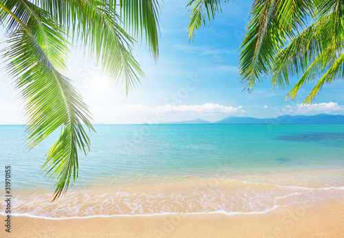 Palm and tropical beach - 31970155