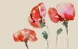 mohnblumen mit kapseln