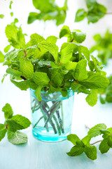 Fresh green mint
