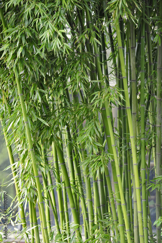 Fotobehang Bamboo bambus