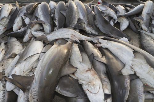 Plexiglas Dubai sharks at a fish market, Dubai,United Arab Emirates