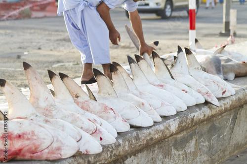 Fotobehang Dubai sharks at a fish market, Dubai,United Arab Emirates