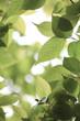 Fresh green in JAPAN