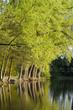 Bäume am See mit Wanderweg