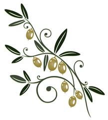 Oliven, Olivenzweig, Zweig, Küche, kochen